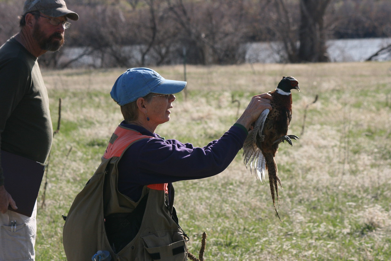 Live Pheasant Track