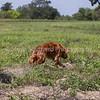 grca_open2012_0760