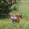 grca_open2012_0765