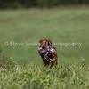 grca_open2012_0876