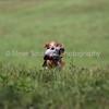 grca_open2012_0938