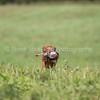 grca_open2012_0973