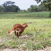 grca_open2012_0972