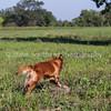 grca_open2012_0046