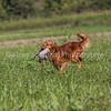 grca_open2012_0164