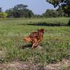 grca_open2012_0202