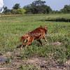 grca_open2012_0200