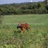 grca_open2012_0434