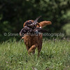 grca_open2012_0908