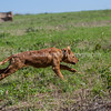 grca_puppy2012_0575