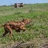 grca_puppy2012_0574