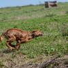 grca_puppy2012_0573