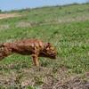 grca_puppy2012_0572