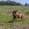 grca_puppy2012_0581