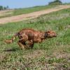 grca_puppy2012_0570