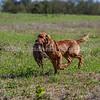 grca_puppy2012_0583