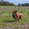 grca_puppy2012_0580