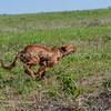 grca_puppy2012_0576