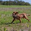 grca_puppy2012_0582