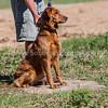 grca_puppy2012_0665
