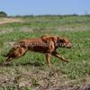 grca_puppy2012_0670