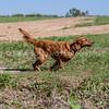 grca_puppy2012_0666