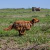 grca_puppy2012_0671