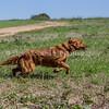 grca_puppy2012_0669