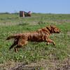 grca_puppy2012_0672