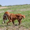 grca_puppy2012_0680