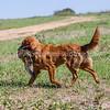 grca_puppy2012_0683