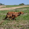 grca_puppy2012_0668
