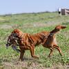 grca_puppy2012_0679