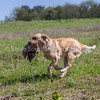 grca_puppy2012_0631
