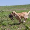 grca_puppy2012_0634