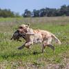 grca_puppy2012_0628
