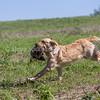 grca_puppy2012_0633