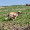 grca_puppy2012_0621