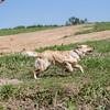grca_puppy2012_0616