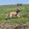 grca_puppy2012_0622