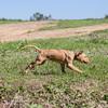 grca_puppy2012_0093