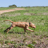 grca_puppy2012_0096