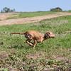 grca_puppy2012_0094
