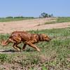 grca_puppy2012_0971
