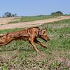 grca_puppy2012_0973