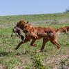 grca_puppy2012_0987