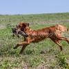 grca_puppy2012_0988
