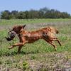 grca_puppy2012_0984