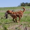 grca_puppy2012_0986