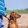grca_puppy2012_0970